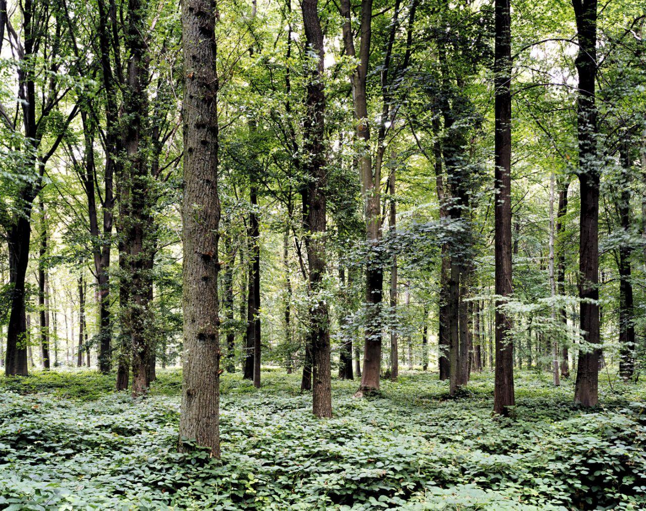 Bosque. Lugar de la batalla del Somme, Delville Wood, Francia, 2002