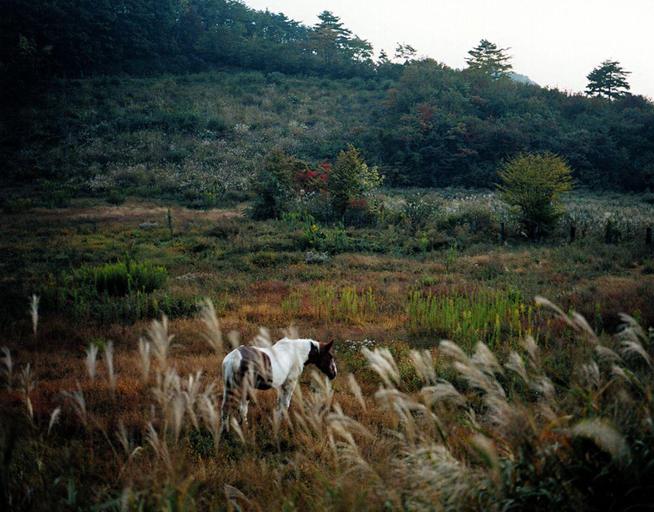 Caballo, aldea evacuada, Iitate, Fukushima