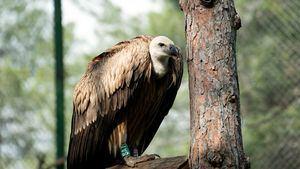 Turkish Cargo devuelve a su hogar a un ave en peligro de extinción