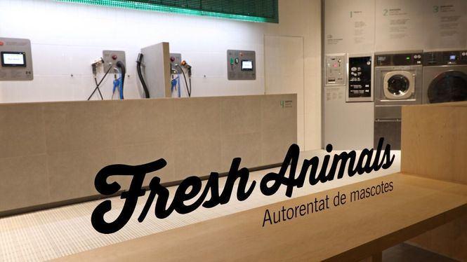 Fresh Animals, lavanderías autoservicio para mascotas, abrirá su segundo establecimiento