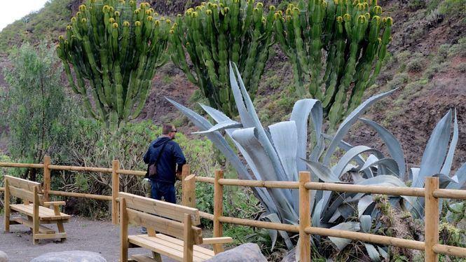 Nueva ruta turística botánica en Las Palmas de Gran Canaria