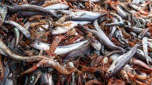 Una apasionante jornada de Pescaturismo en aguas de Castellón