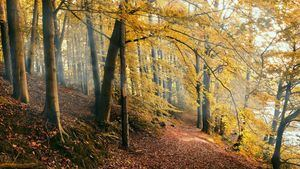 Descubrir los 1.000 otoños que ofrece la provincia de Salamanca
