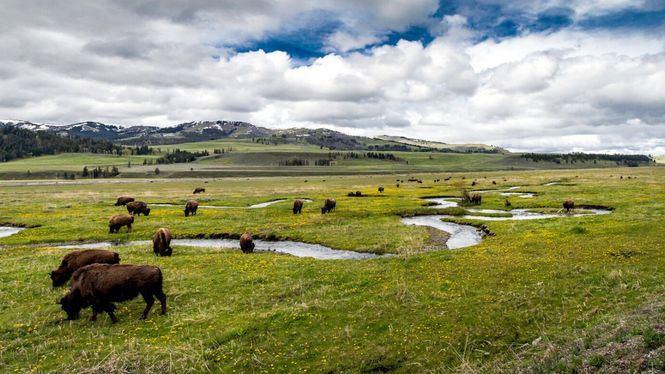En el Parque nacional de Yellowstone
