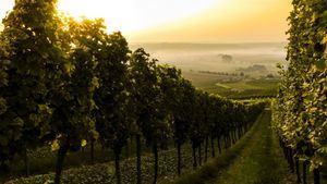 Así fue la vendimia del 2019 y así serán los vinos de los próximos años