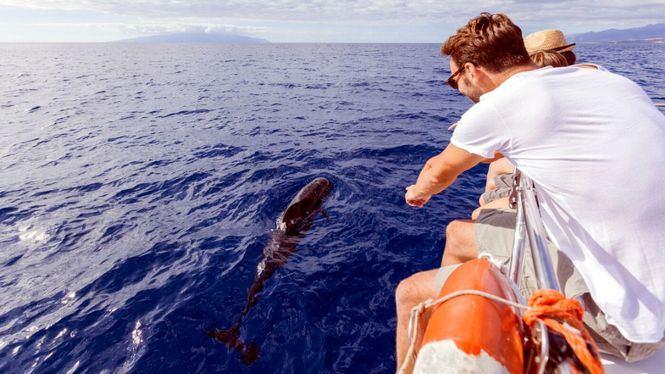 Mission Blue reconoce la riqueza de las aguas de Tenerife y La Gomera