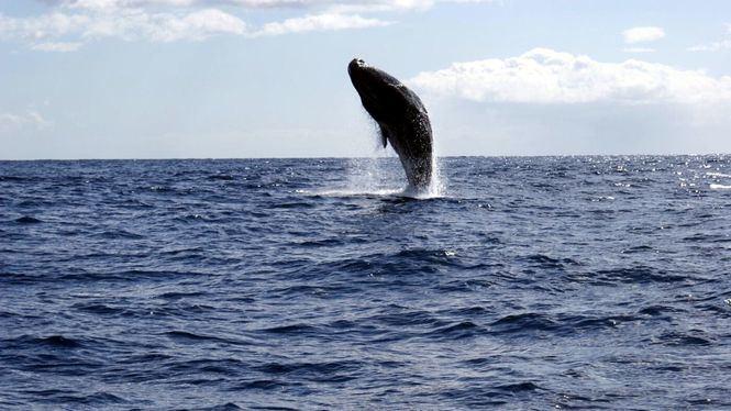 Avistamiento de ballenas y delfines en Madeira