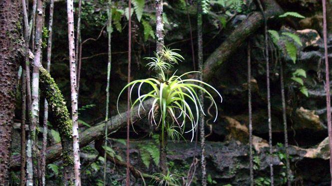 Nuevas excursiones para explorar la naturaleza de Las Bahamas