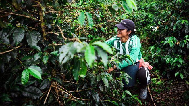 Utópica e IE lanzan un proyecto para impulsar el entorno social y ambiental de comunidades locales