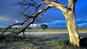 Los secretos del desierto de Kalahari