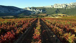 La Ruta del Vino de Rioja Alavesa renueva su certificado ACEVÍN