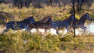 Covid-19, información para clientes de un safari