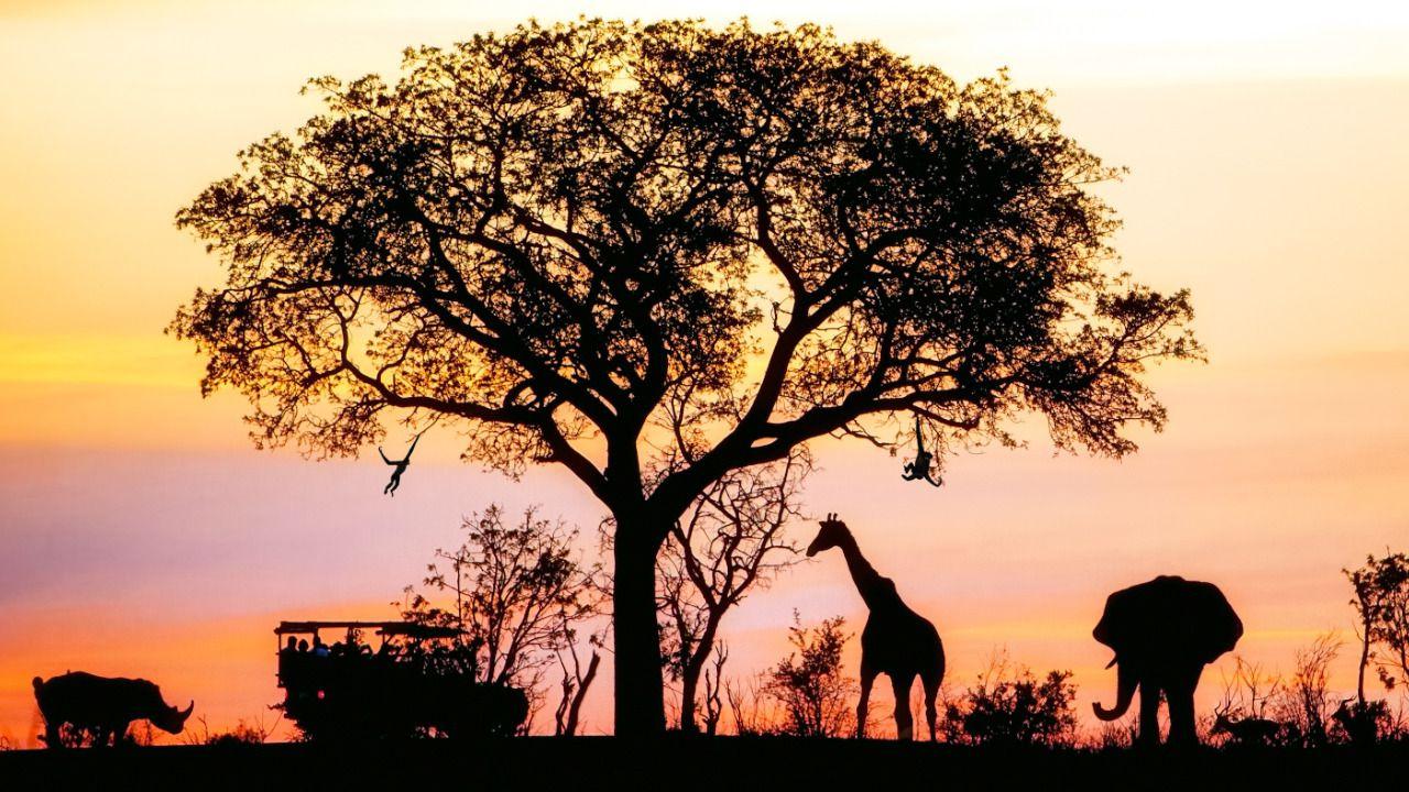AfricaTanzaniaSN: AfricaTanzaniaSN