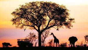 Descubrir cinco infinitas llanuras y sabanas en un safari por el África negra