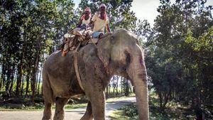 78 elefantes vuelven a su hábitat por falta de turistas en Tailandia
