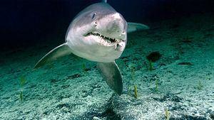 Cosas increíbles sobre el océano profundo