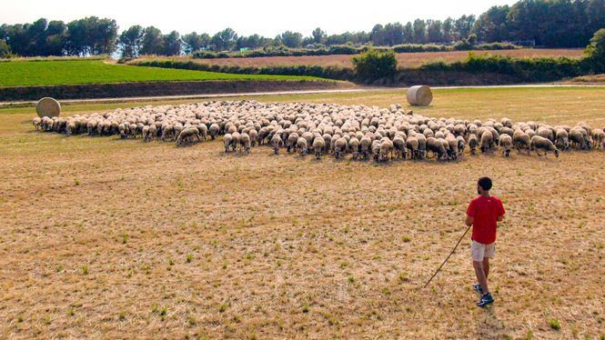 INTEROVIC y Amazon colaboran para comercializar carne de cordero