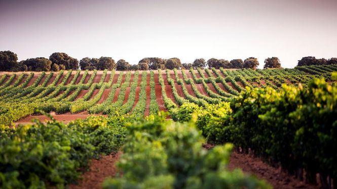 La Ruta del Vino Ribera del Duero reabre con todas las medidas de seguridad necesarias