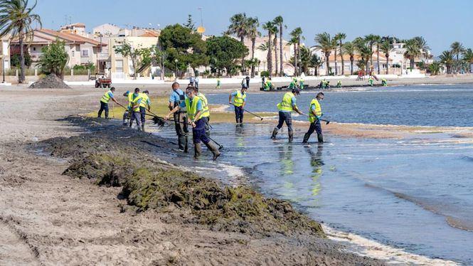 Cartagena refuerza la limpieza y retirada de algas en el Mar Menor