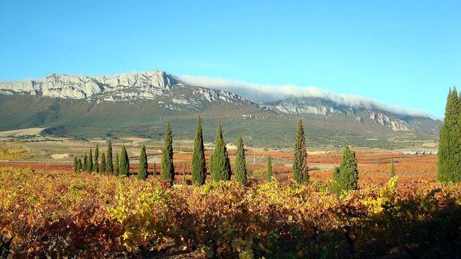 Viaje sensorial por España a través de diez vinos