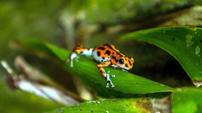 Las especies de animales más exuberantes de Centroamérica y República Dominicana