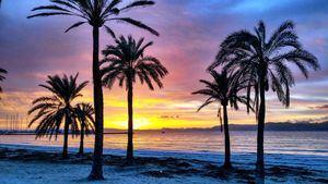 Refrescante ruta por heladerías artesanales de Palma de Mallorca