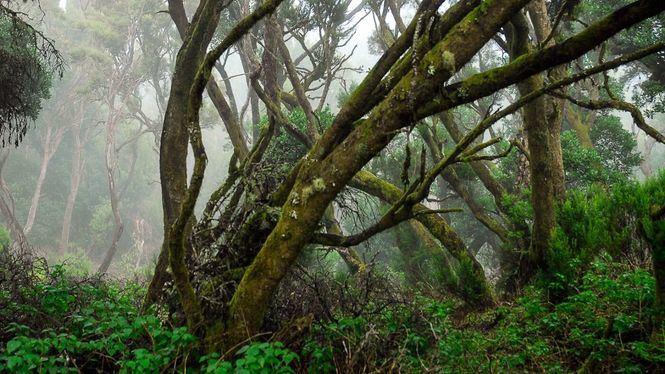 La serie Hierro se rodará en la reserva de La Llanía