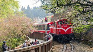 Tren de los bosques en Alishan