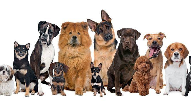 Logis Hotels, cadena hotelera dog-friendly