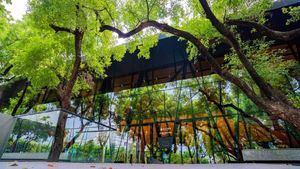 Primera biblioteca forestal de Taiwán