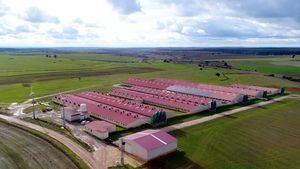 Los ganaderos de porcino se comprometen disminuir la huella hídrica en un 50%