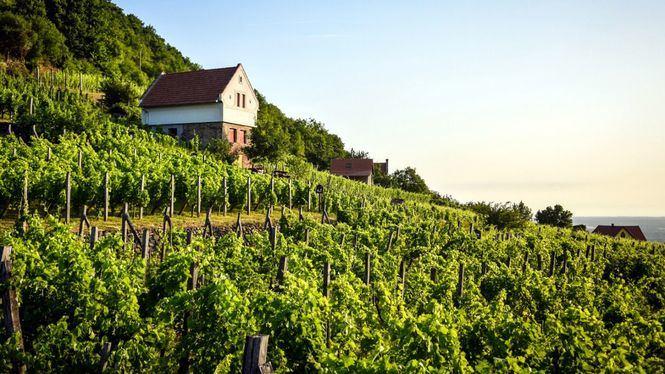 Hungría cobra protagonismo por sus excelentes vinos