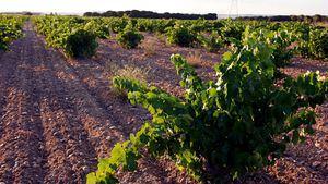 Bodegas De Alberto medalla de Platino en los Decanter World Wine Awards