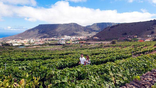 Enoturismo en Tenerife