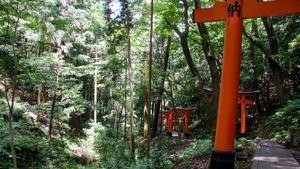 Pista de Senderismo en Fushimi Inari