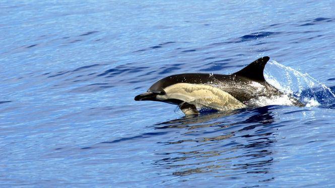 La Fauna marina exótica de Tenerife