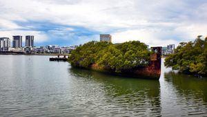 Barco SS Ayrfield (Bahía de Homebush, Australia)