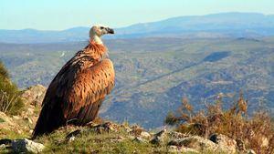 Acuerdo de colaboración entre la Ruta del Vino Ribera del Duero y la Fundación Patrimonio Natural