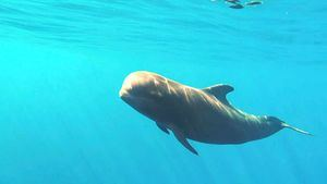El hotel Baobab Suites creará un centro de interpretación de cetáceos