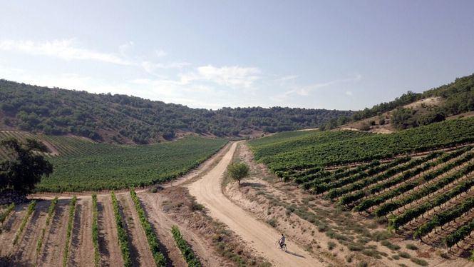 Experiencias sensoriales en torno al vino y al fabuloso paisaje que lo rodea