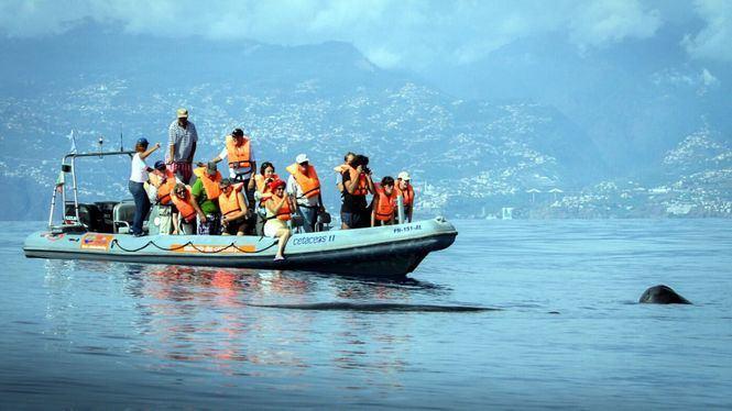 Madeira ofrece senderos de trail running donde disfrutar al aire libre y con seguridad