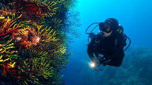 PADI se alía con Canela para promover el turismo de buceo