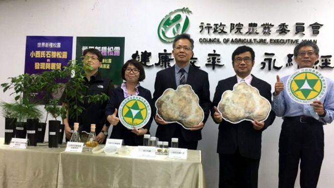 Taiwán presenta un método para cultivar especies autóctonas de trufa blanca
