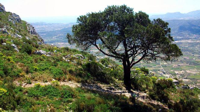 Ruta para disfrutar la floración y campings donde alojarse