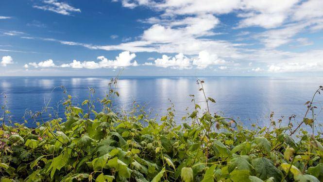 El cultivo del vino de Madeira se remonta a 1419