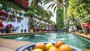 Los Tour operadores visitan el Color de los Patios de Córdoba