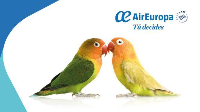 Air Europa, la primera aerolínea en España que incluye Bizum en su pasarela de pago
