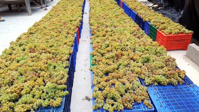 Estudio Diagnóstico de AVIBO sobre la Viticultura en Canarias