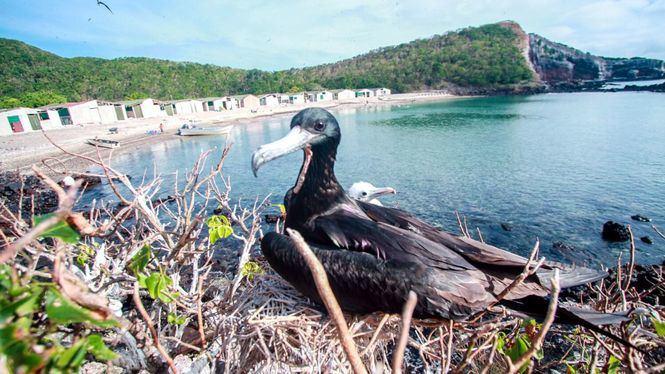 Isla Isabel, isla de origen volcánico del Pacífico hogar de especies únicas de aves