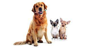 Cepillos de dientes de bambú ecológico para toda la familia (mascotas incluidas)